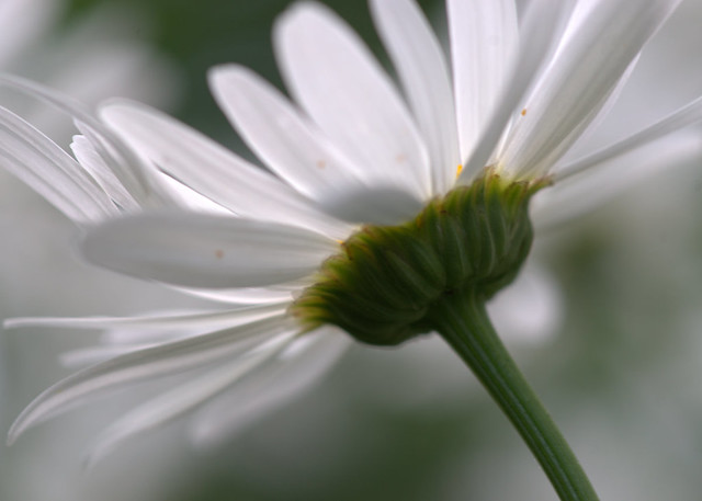 daisy, revisited.