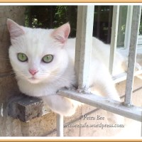 Behind Bars: Photos of a Beautiful White Cat