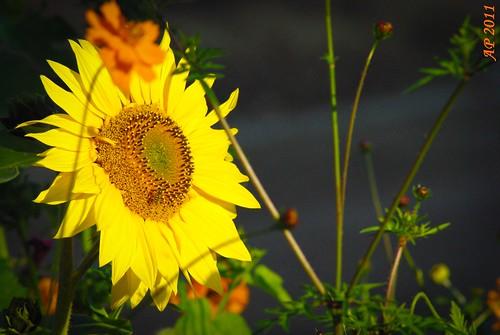 Cherche soleil / Seeking Sun