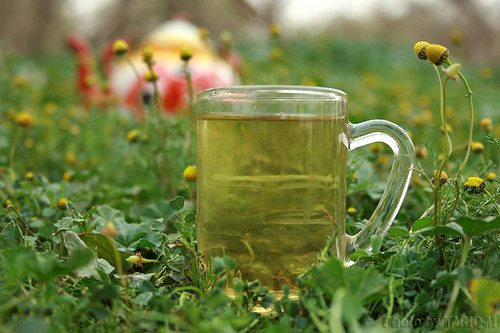 Chamomile tea by TARIQ-M