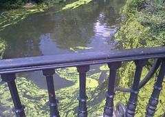 Regent's Park On A Sunny Day, July '11