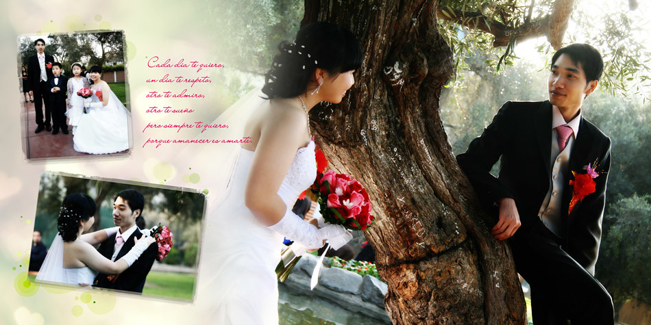 book novias bodas