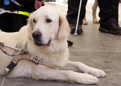 BuGa Koblenz - Blindenhund