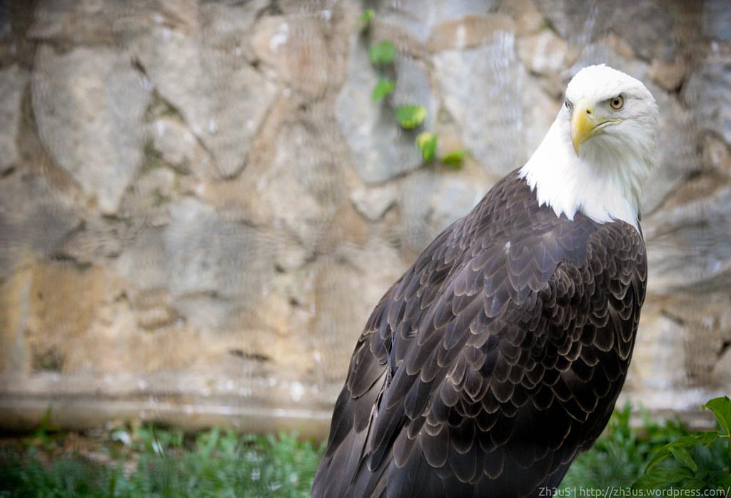 Jurong Birdpark (72 of 89)