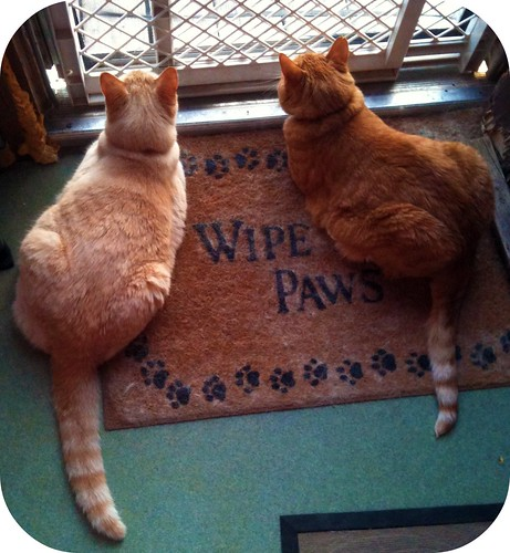 Romeo and Milo watch the birds