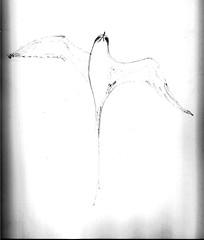 Bermuda Longtail 004