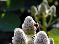 A Nunnington Bee
