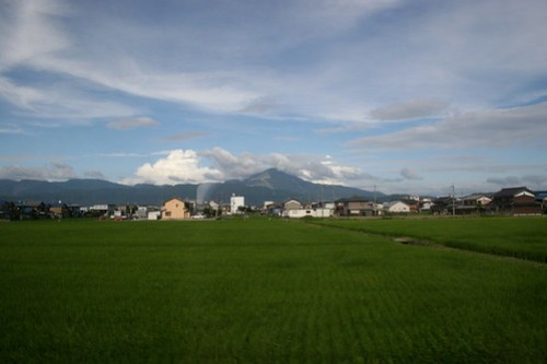 Rice fields and mountain