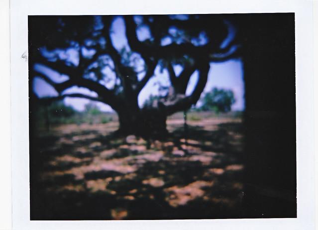 Roid Week Day 2: Big Tree