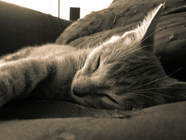 lumen sleeping