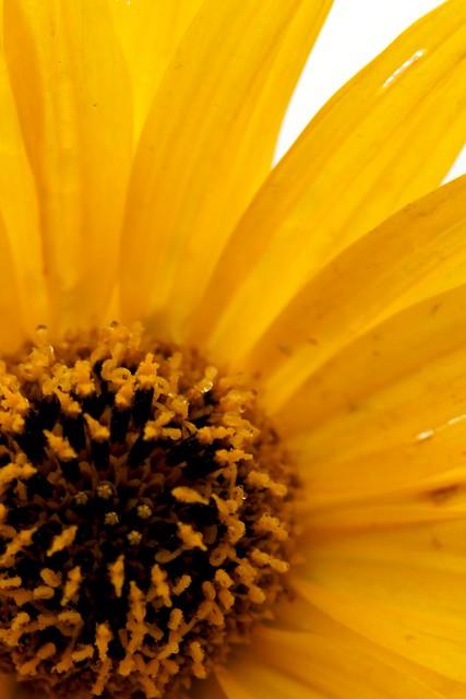 Summer Flower 1