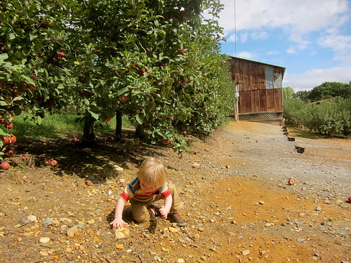 at the apple orchard