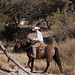 Paso Robles Horse Ranch 11