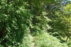 新治市民の森(観察路)(Niiharu Community Woods)