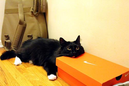 Closet Case Kitty - 2