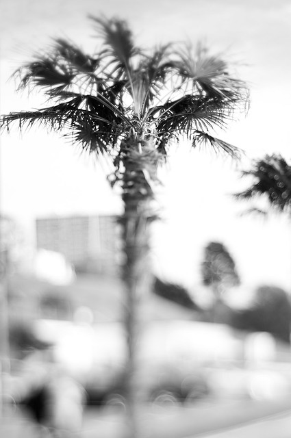 Bokeh Palms