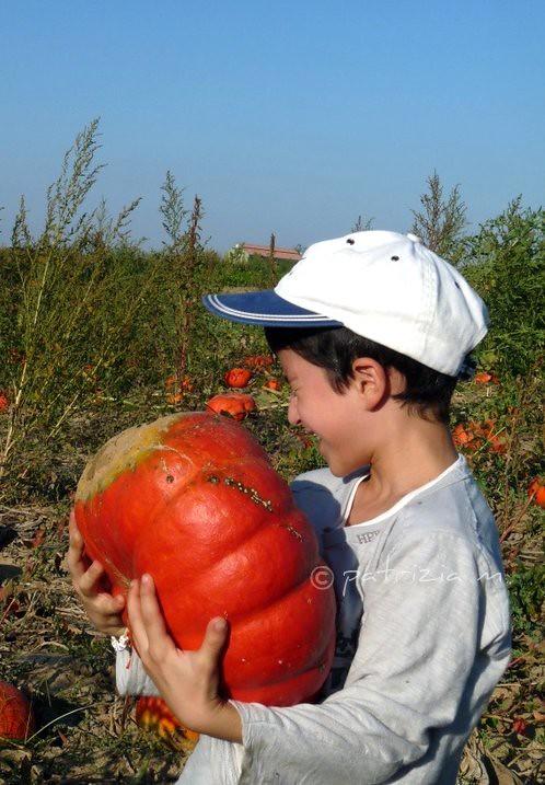 Vittorio e la zucca pesante