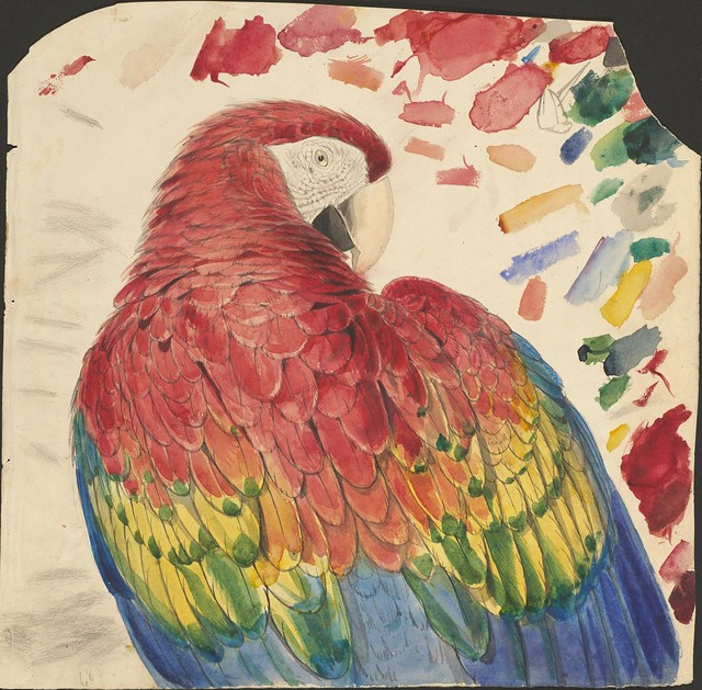 Parrot head (red and yellow macaw) - graphite and watercolour drawing (68)