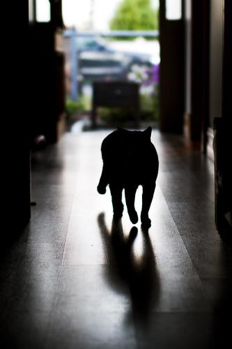 meow and myow shadow by Matt Hovey