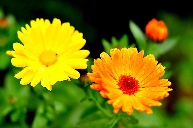 yellow and orange