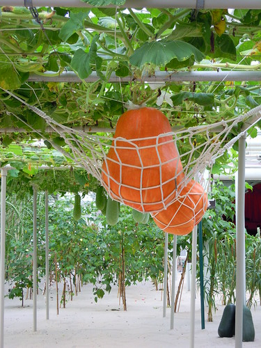 Pumpkin Hammock