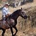 Paso Robles Horse Ranch 13