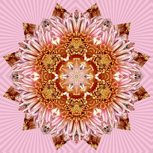 Kat's Chrysanth 2