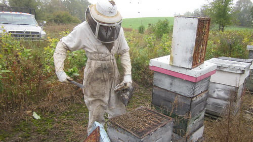 removing queen excluders, Canadian beekeeping, business, production planning