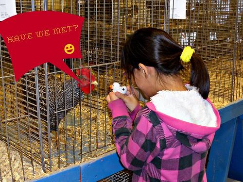 Chicken Meets Rubber Duck