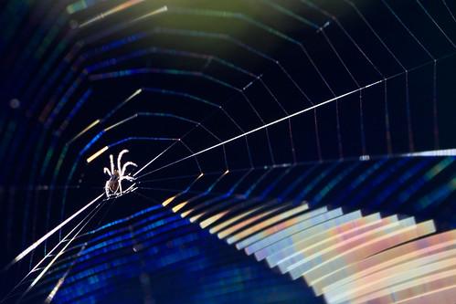 Rock star spider
