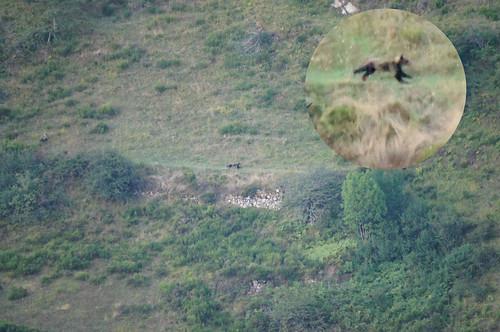 Running Bear...