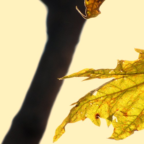autumn leaves, the first ones