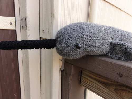 Napoleon the Nervous Narwhal