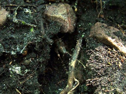underneath cricket rock closeup