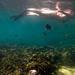 Snorkeling in Tanote Bay, Koh Tao (15 Sept '11)