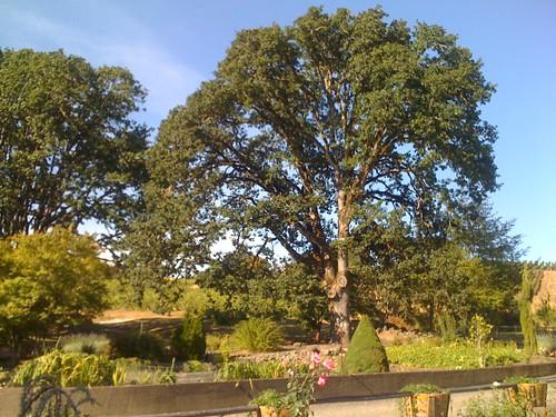 Yamhill Valley Vineyard Nature