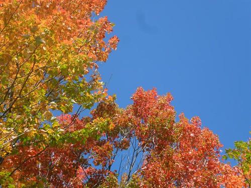 leafy Blaze