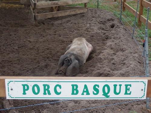 Cerdo vasco