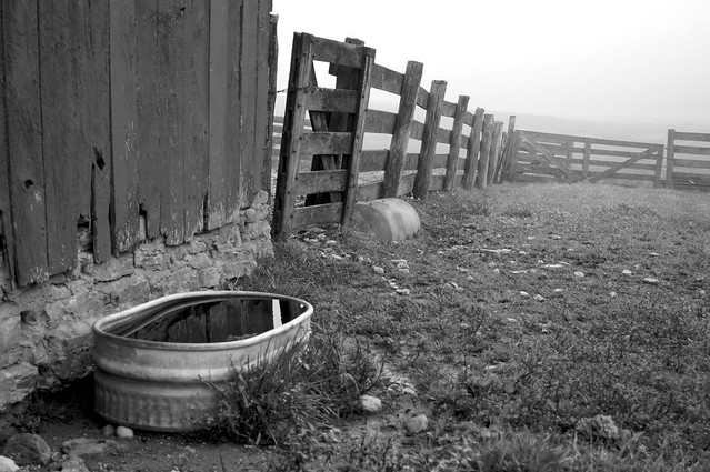Watering Trough B&W