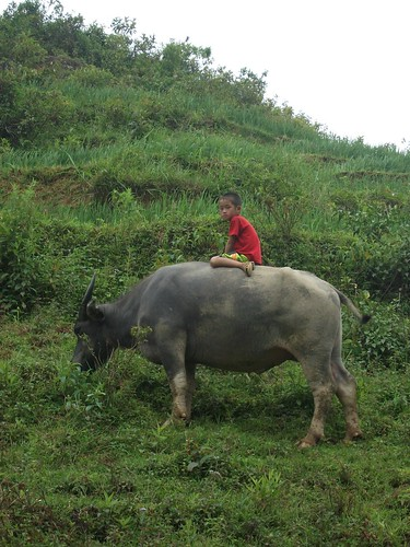 Riding a water buffalo in Sa Pa by Carlos F. Domingo