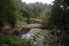 Cedar Falls Dam Upstream