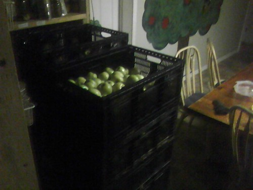 Its apple time! by baldwinmk