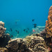 Snorkeling in Tanote Bay