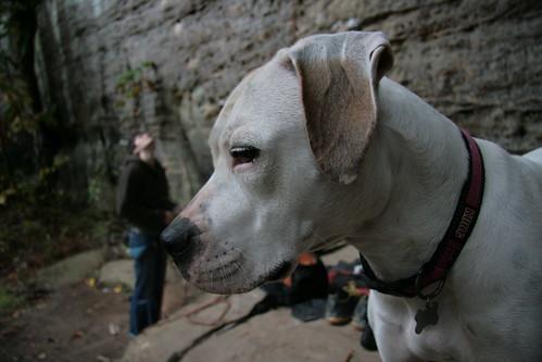 Climber Dog by Dana Bartus