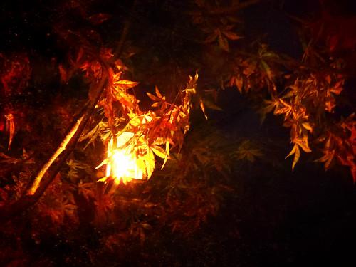 Light in El Bosc de les Fades