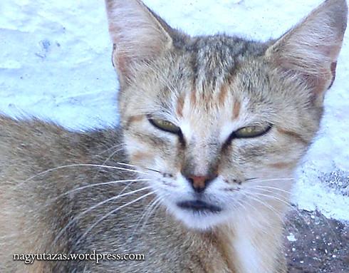 Kóbor macska a török tengerparton