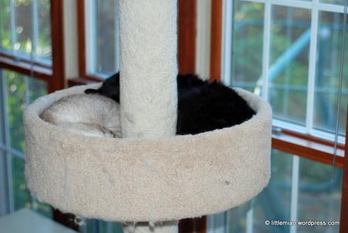 chunkem 10-15-2011 4-02-01 PM