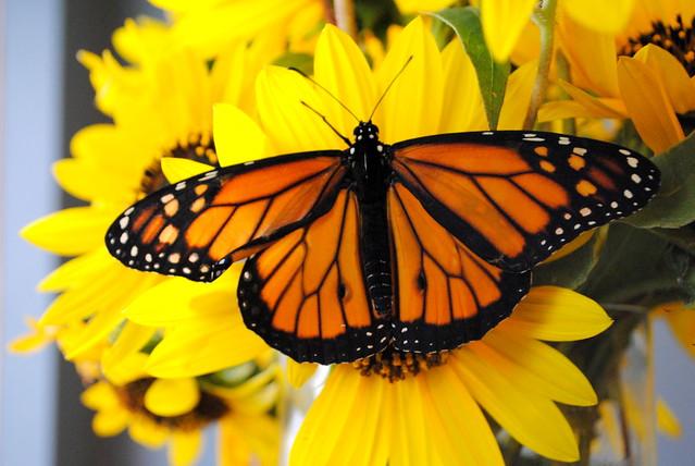 Butterfly 025