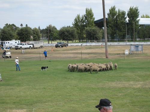 2011_10_01_Lambtown_r_great_piglet_escape