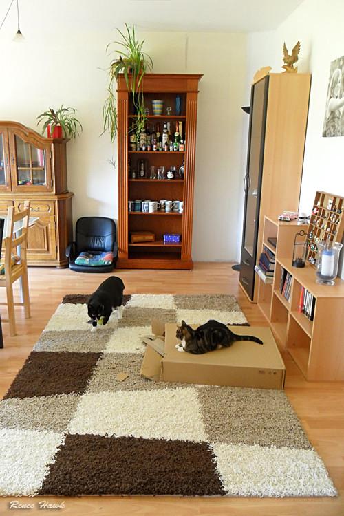 Schach für Katzen